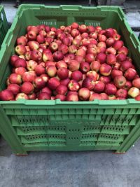 Top Fruit|Apples|Red Jonaprince