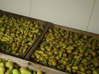 Top Fruit|Pears|Conference